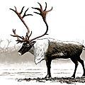 Renne animal prehistoire