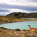 Torres del Paine30