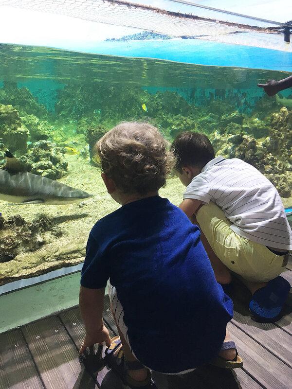 5-aquarium-planete-mer-carnon-sud-sea-montpellier-ma-rue-bric-a-brac