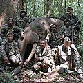 Pygmées et éléphants victimes de rothschild