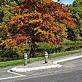 Canal CASTETS-EN-DORTHE 10 et 14 octobre 2015 (6)