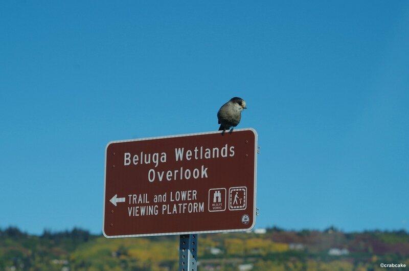 Beluga Wetlands 3