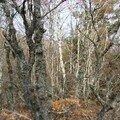 Forêt 1 - Trajet Le Falzet - Saint Alban sur Limagnole