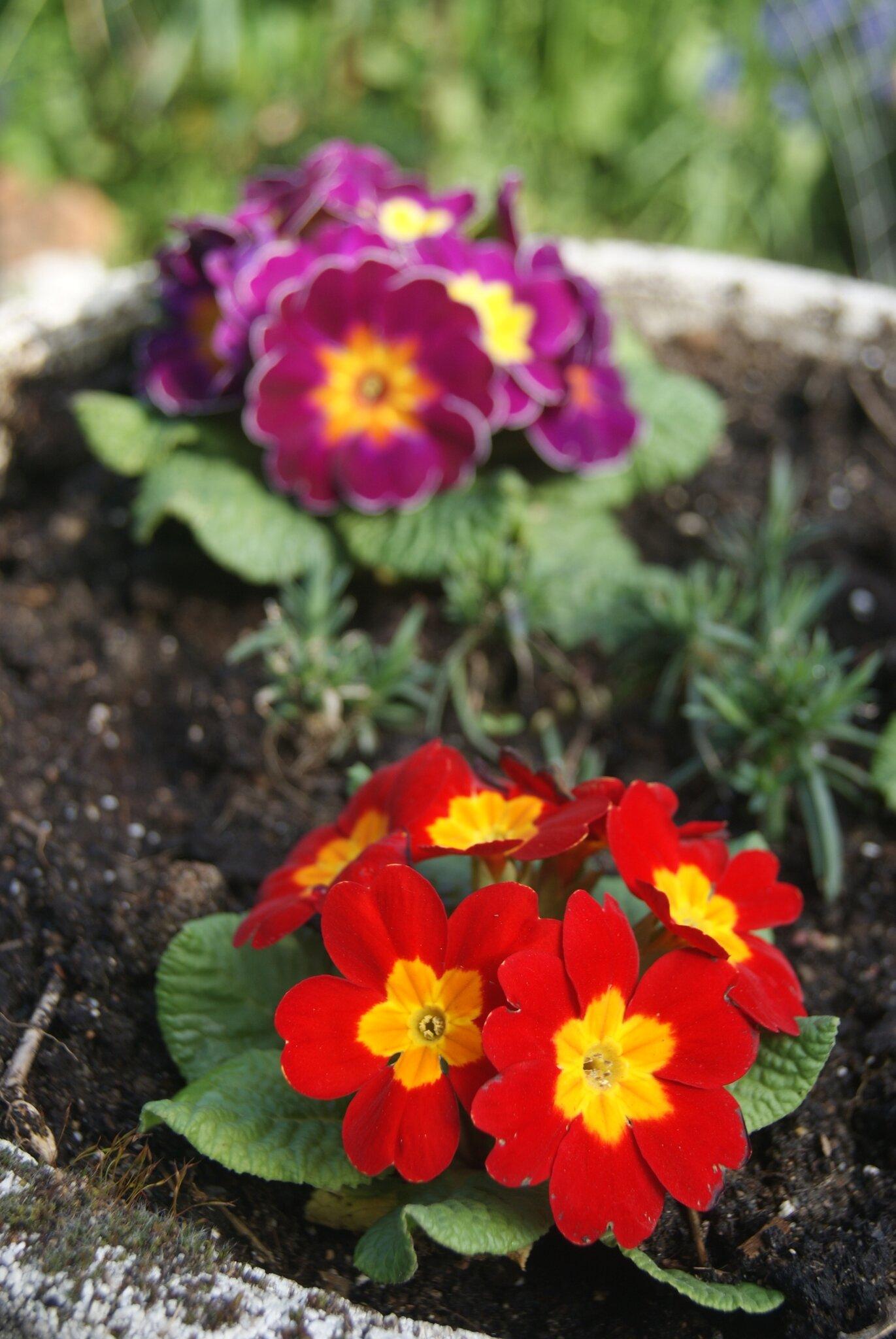 Mon Jardin En Avril semez en avril - envie de jardin