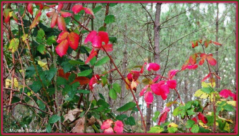 Feuilles vertes et roses