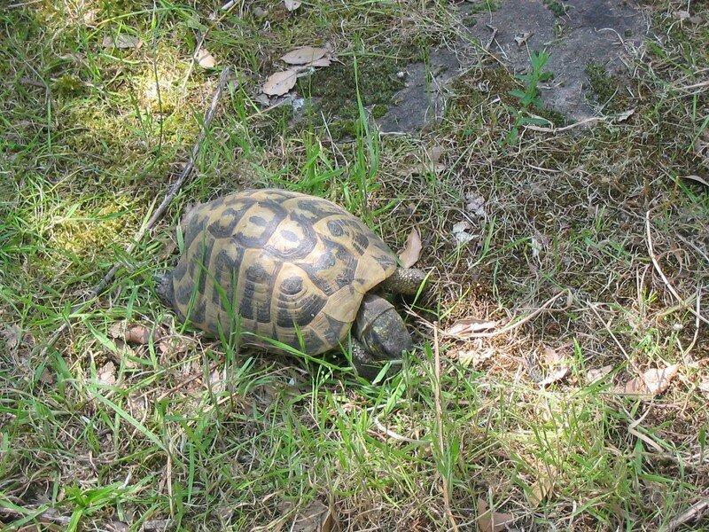 visite du parc des tortues du Cupulata