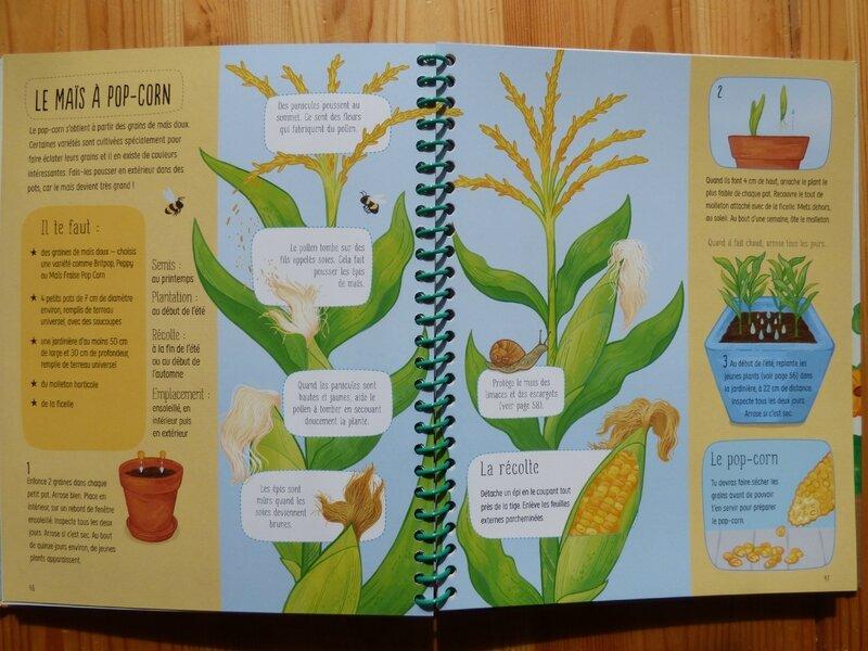 Je cultive mon potager (2)