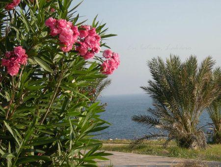 Chypre Paphos sea