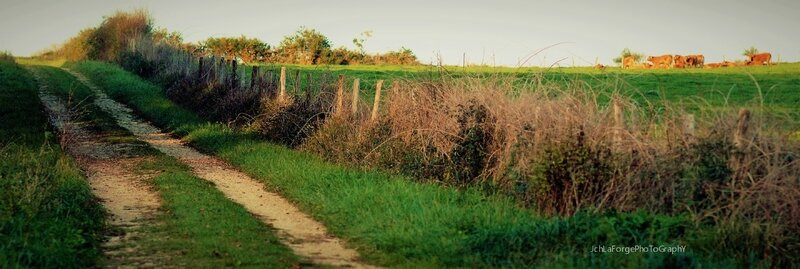 Chemins Saint Adjutory (4)