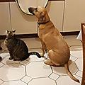 Claudy et le chat 2