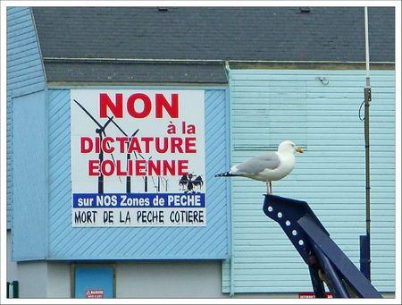 Treport non dictature eolienne mouette 2