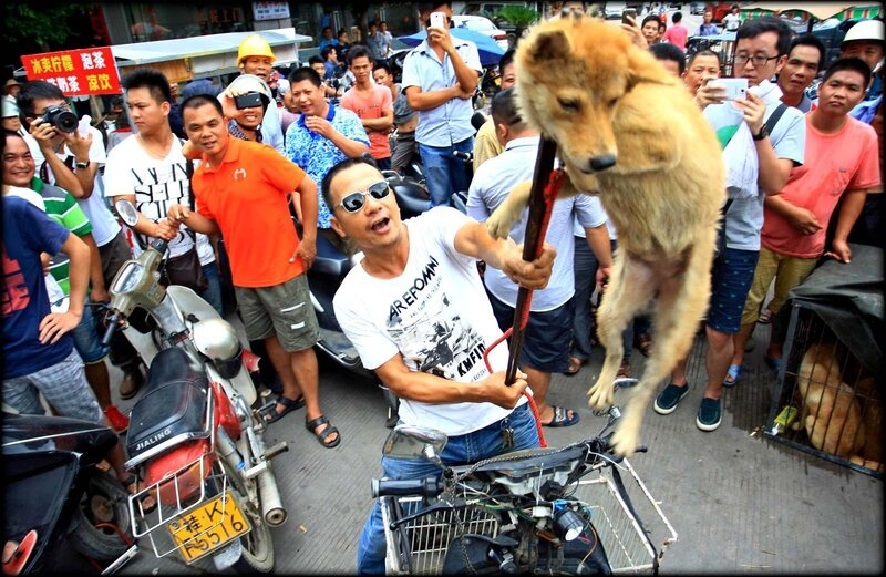 massacre_yulin__