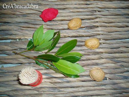 Coques de noix
