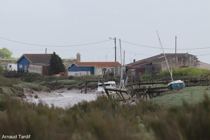 00719 Oléron Avril 2019 - Marais de Brouage - Le Port de la Cayenne