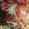 Crustacés - Invertébrés - Fonds marins de Palamos