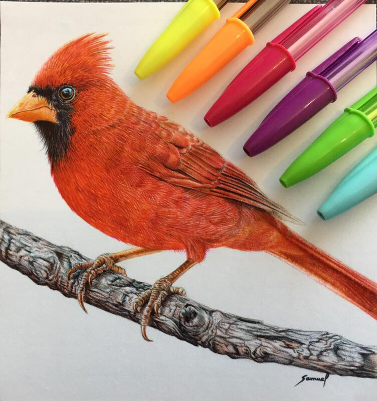 samuel silva et ses stylos