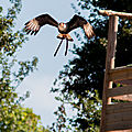 rapaces beauval16