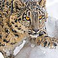 leopard_nma69pIot71tkq3nno1_540