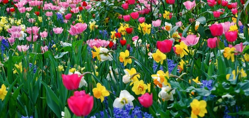 create-your-own-beautiful-spring-garden-3