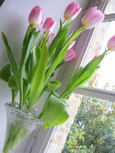 Tulipes____la_Bobin_014