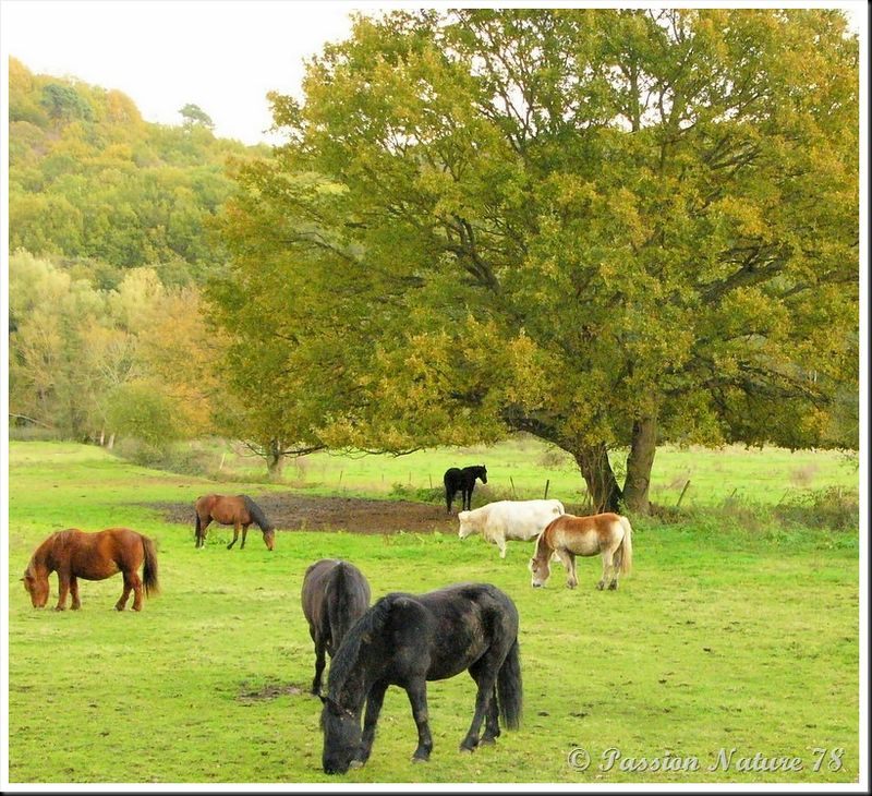 Le 78 département du cheval (10)