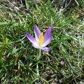 Ma première fleur
