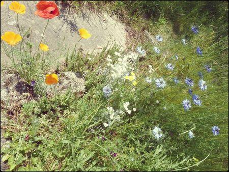 fleurettes 3