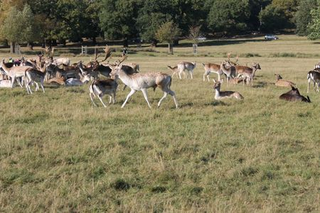 richmond park (33)