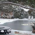 neige, Janvier1