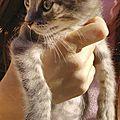 Des chatons gris pastel ! adoptés !!