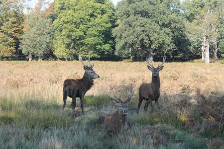 richmond park (22)