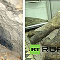 Jenya, le mammouth congelé