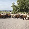 Lesbos paysages 14