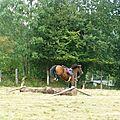 Jeux équestres manchots - parcours de pleine nature après-midi (50)