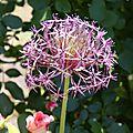 fleur 7 nathalie dentzer