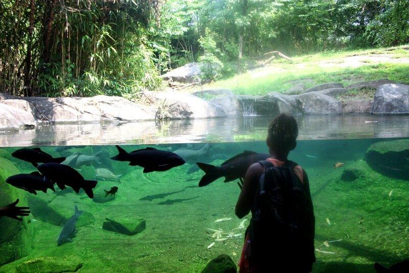 J11 - 08 juillet 2014 - zoo du Bronx (167).JPG