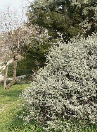 Montredon_5_Mars_2011