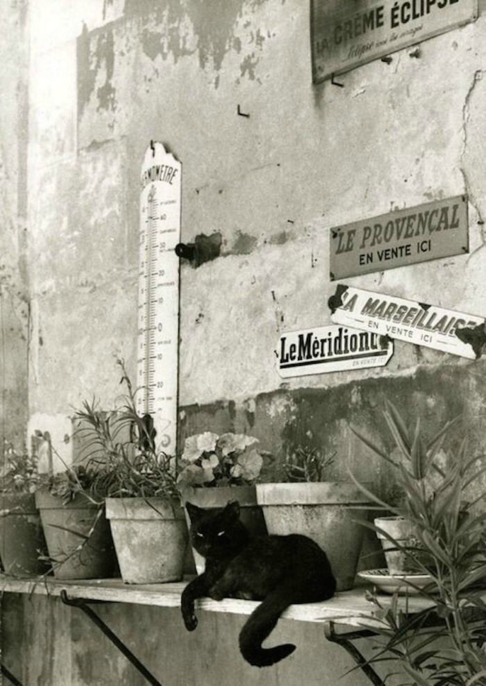 paris-chats-photos-Willy-Ronis1