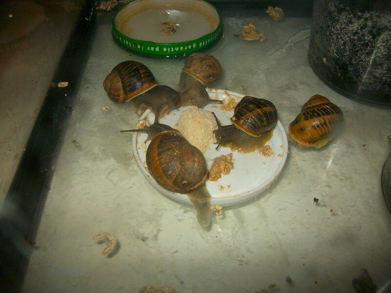 les reproducteurs pendant leur repas