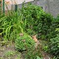 Une petite présentation du jardin