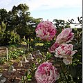 Windows-Live-Writer/jardin_D005/DSCF3846_thumb