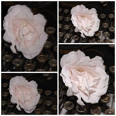 Roses pour Katia (17)