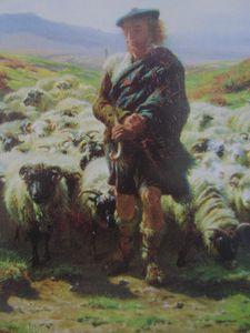 Berger écossais 1855-1856 détail