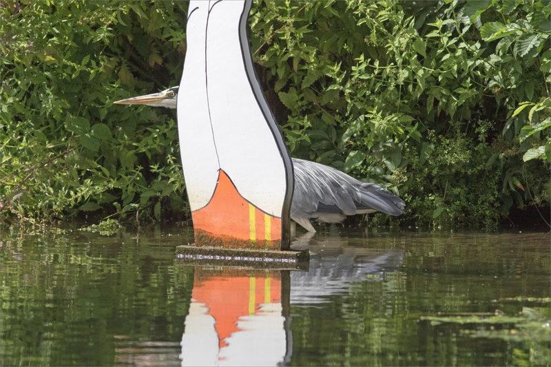 Oiseau héron baigneuse 3 070821
