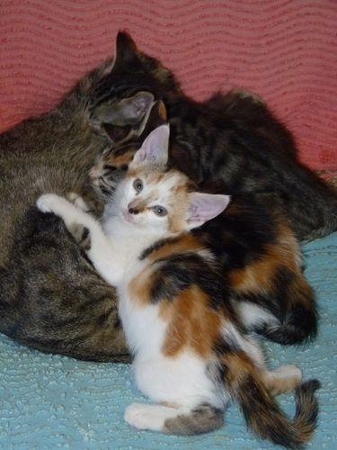 2009 09 24 Les petits chatons