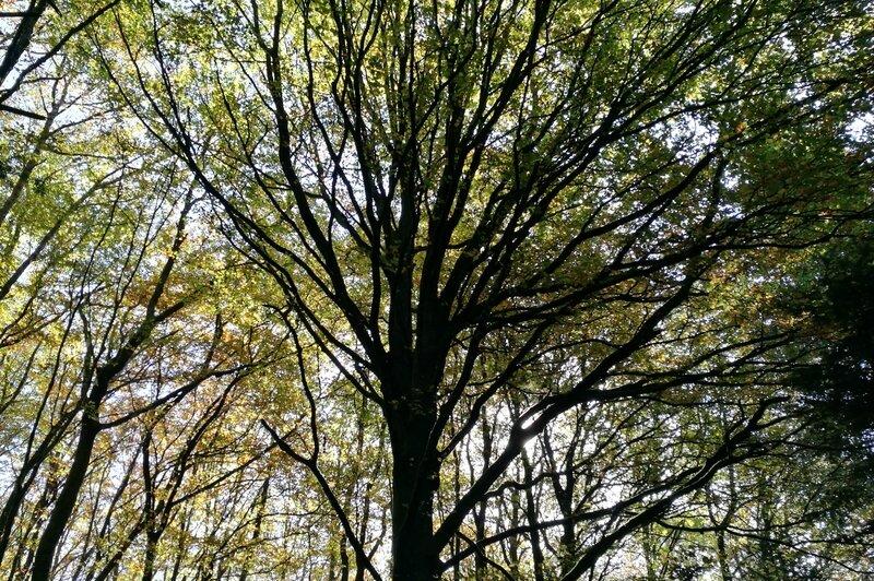 Corancy, arbre (58)