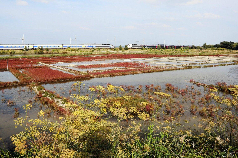 Marais salants de Guérande_A99A7450