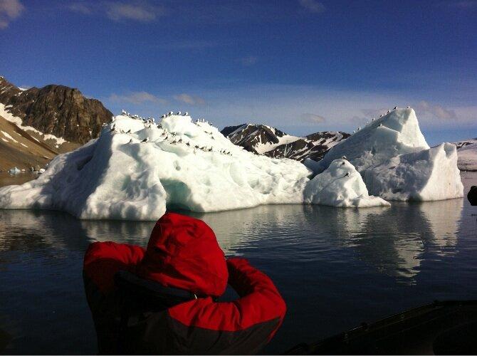 Mouettes_sur_icebergs