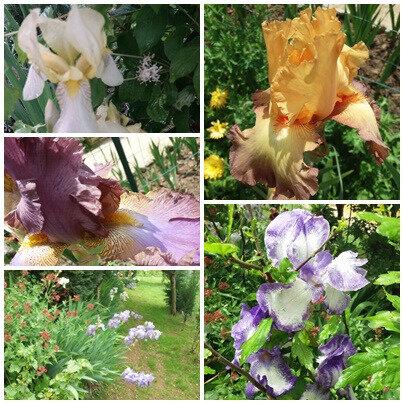 Balades fête des mères brocante jardin (23)