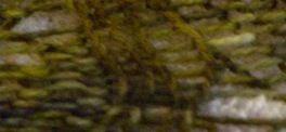 DSCN5590